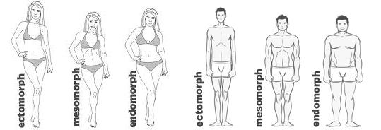 bodytypess (1)