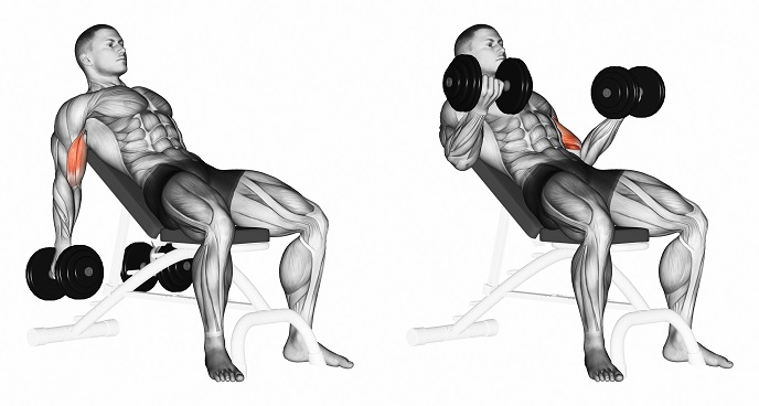 Incline dumbbell curl | Dutch4Health