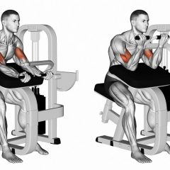 Machine biceps curl